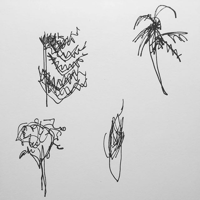 Trees (clockwise from top left: pine, palm, elm, cypress) #100daysofgoodthings #blindcontour #the100dayproject -T