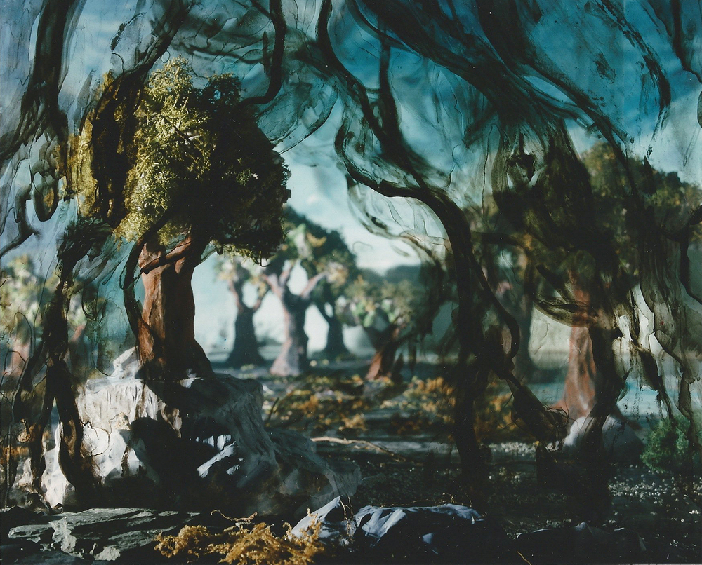 Veiled Forest , 1997, chromogenic print 153 x 183 cm. collection, National Gallery of Canada