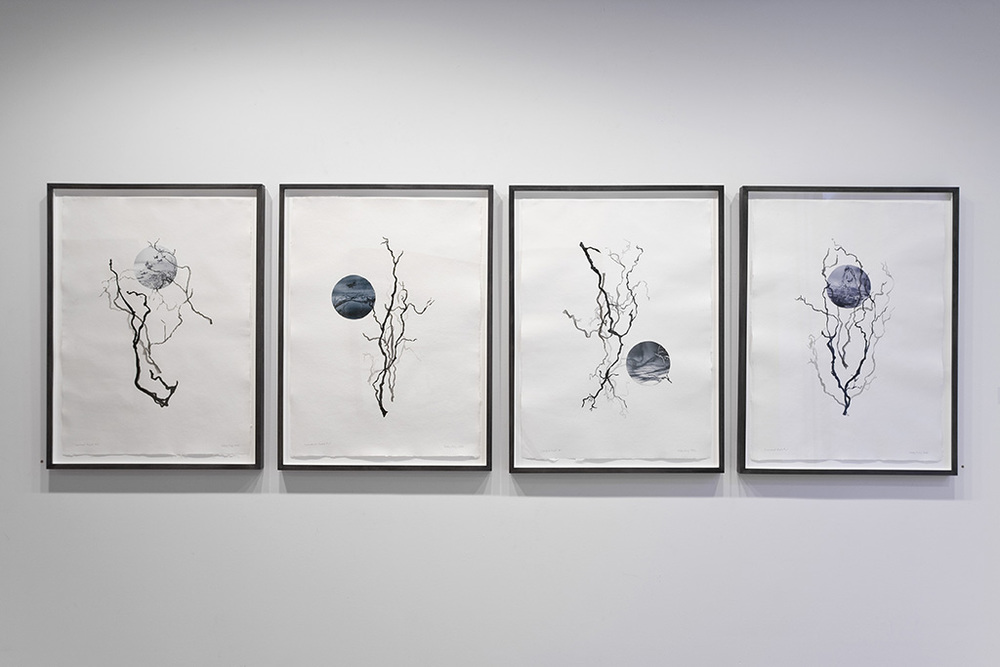 Installation View, Loosened Roots, ink drawing and photo collage
