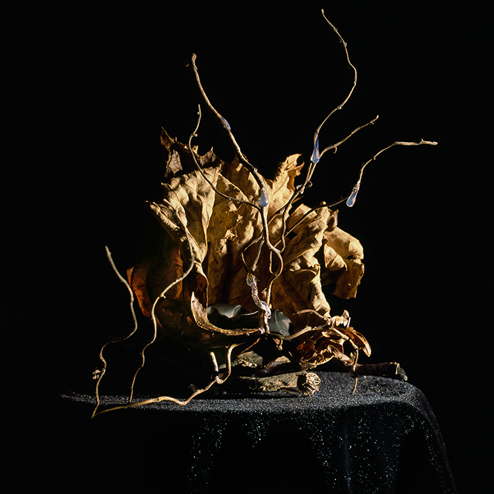 Still Life #1, chromogenic print mounted on Dibond 42x38 cm