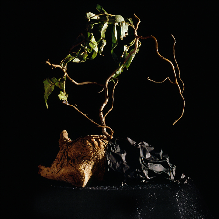 Still Life #6, chromogenic print mounted on Dibond 42x38 cm