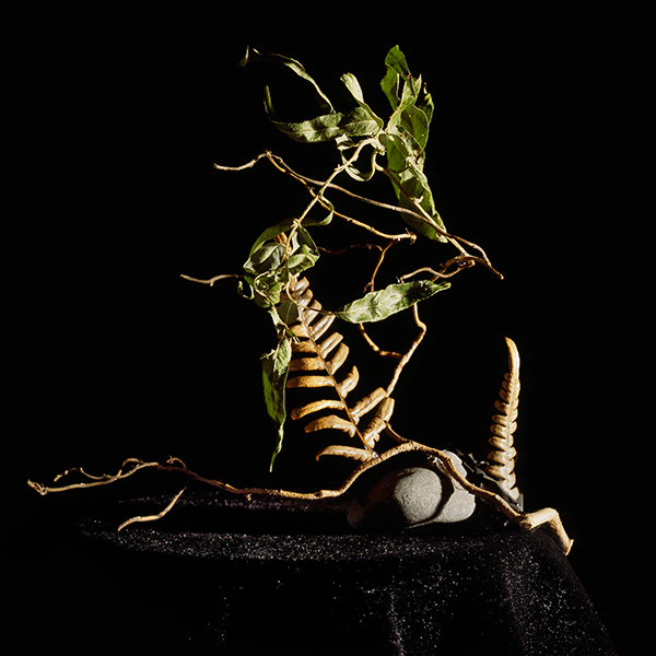 Still Life #8, chromogenic print mounted on Dibond 42x38 cm