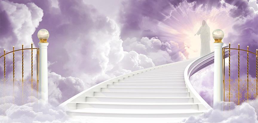 Enter Heaven Lilac  M.jpg