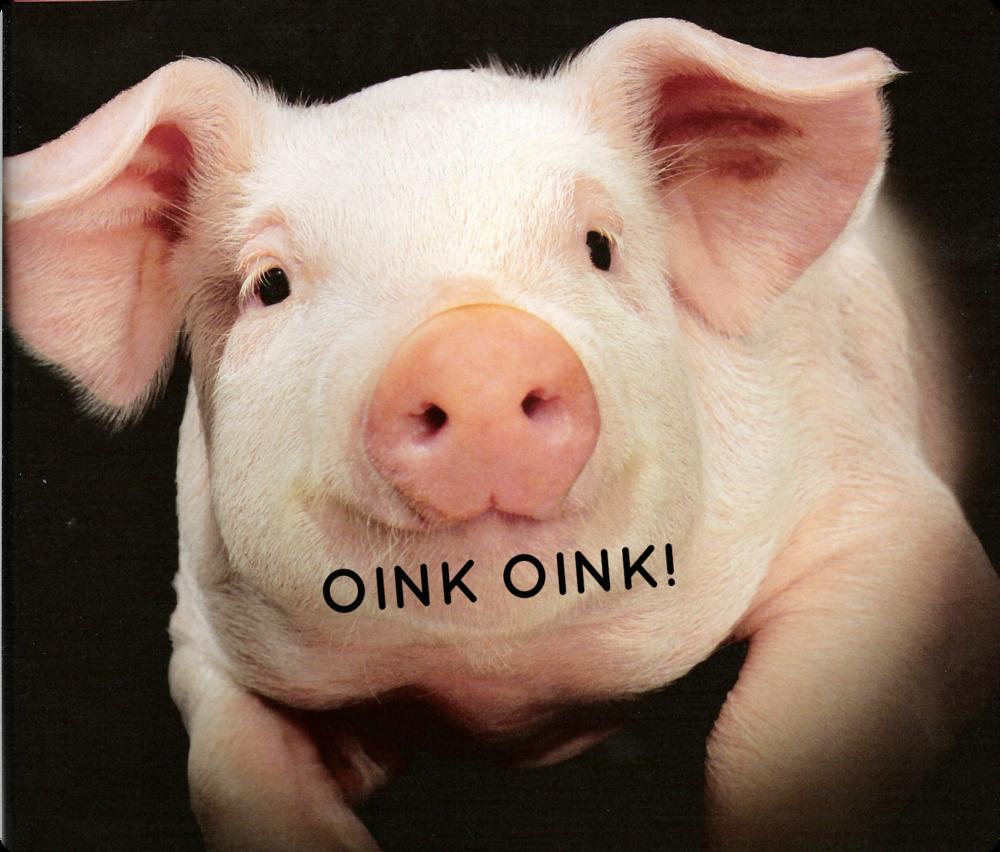 pig+OINK+OINK.png