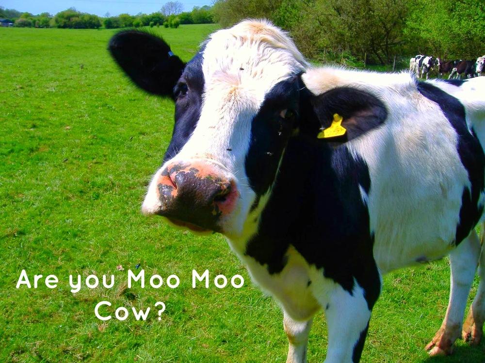 Moo+Moo+Cow.jpg