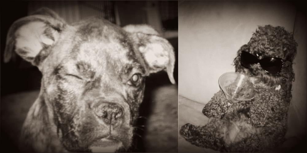 Nelly&Bellebelle