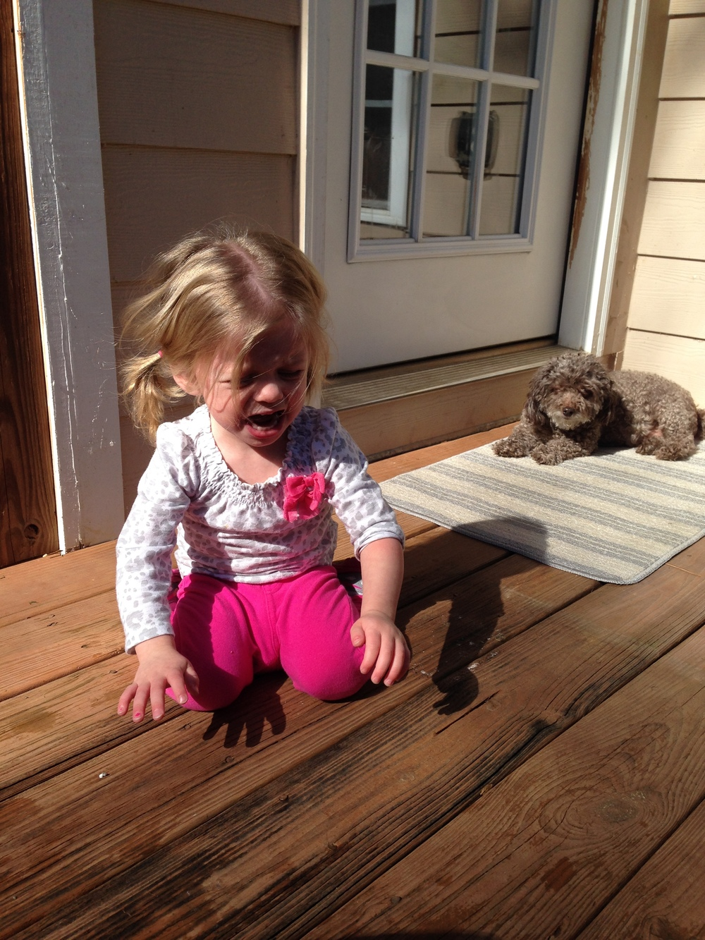 Toddler_tantrum_poodle