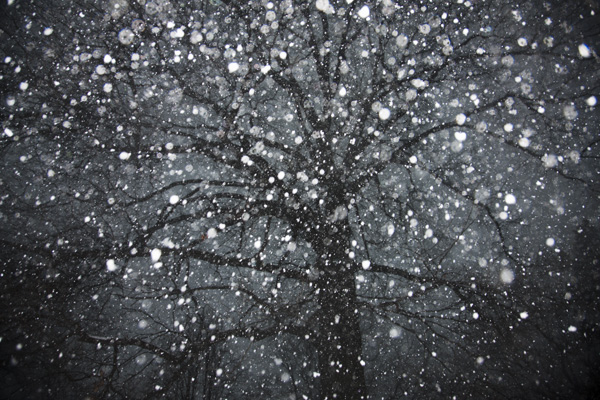 Tree 1,2012.jpg