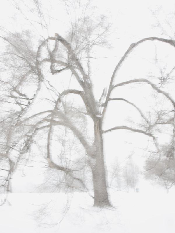 Whiteout 2, 2014.jpg