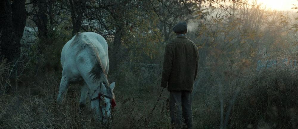 still_horse.jpg