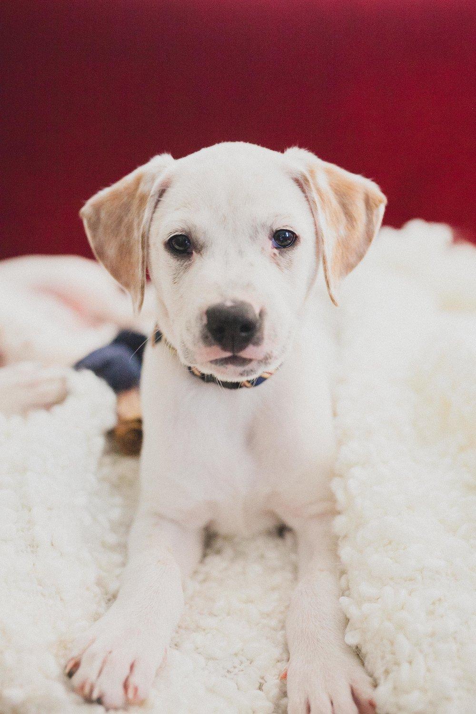 pup pup puppy.jpg