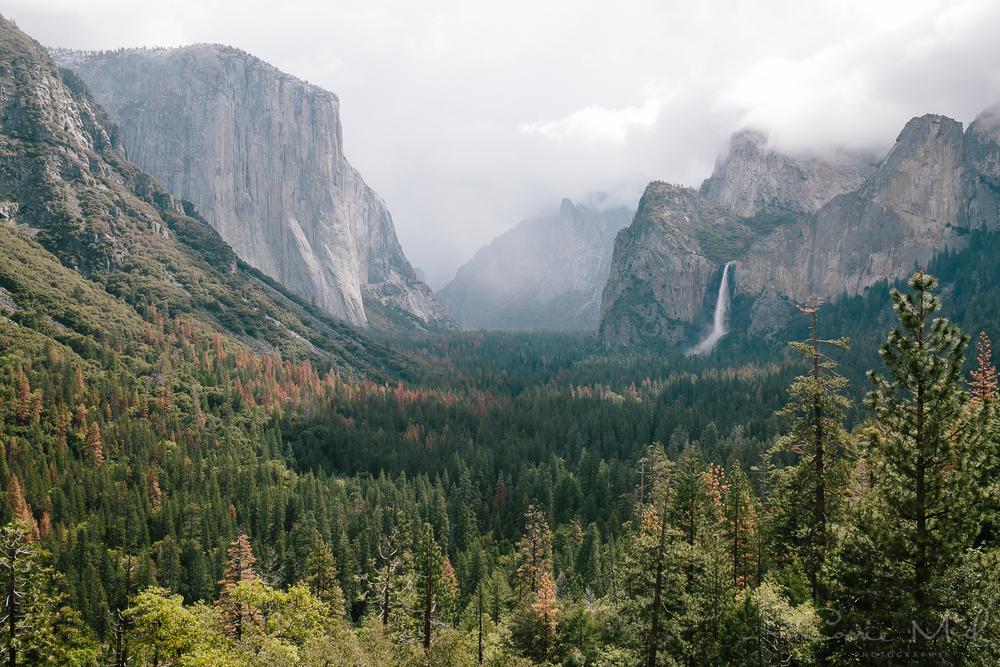 Yosemite April 2016 - Corrie Mick Photography-13.jpg