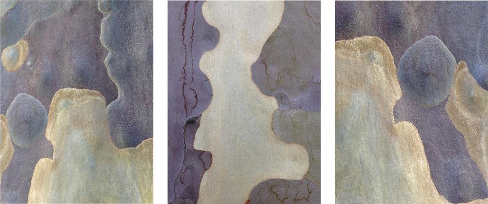 """Triptych #9 eucalyptus bark 3 - 16"""" x 20"""" prints"""