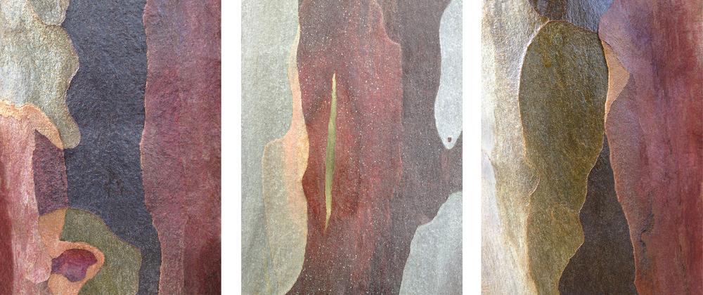 """Triptych #7 eucalyptus bark 3 - 16"""" x 20"""" prints"""