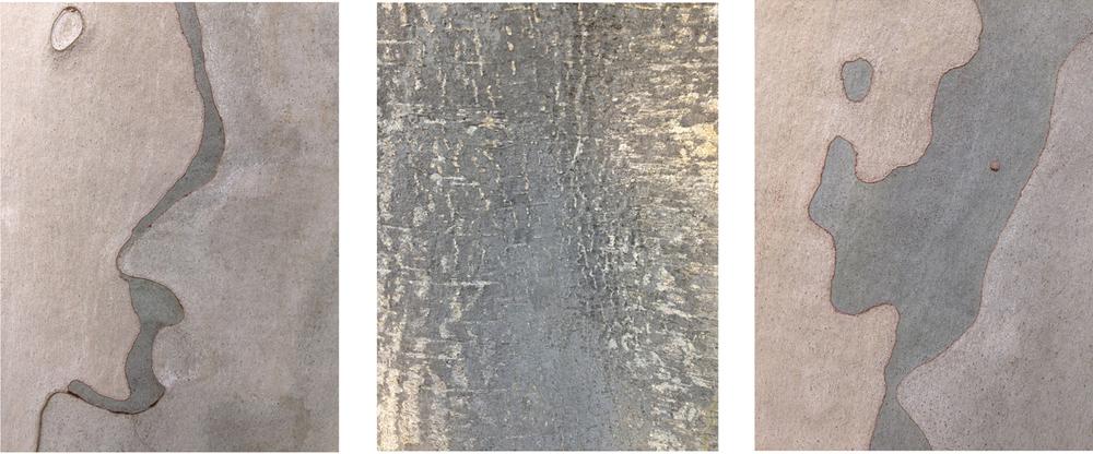 """Triptych #3 eucalyptus bark 3 - 16"""" x 20""""prints"""