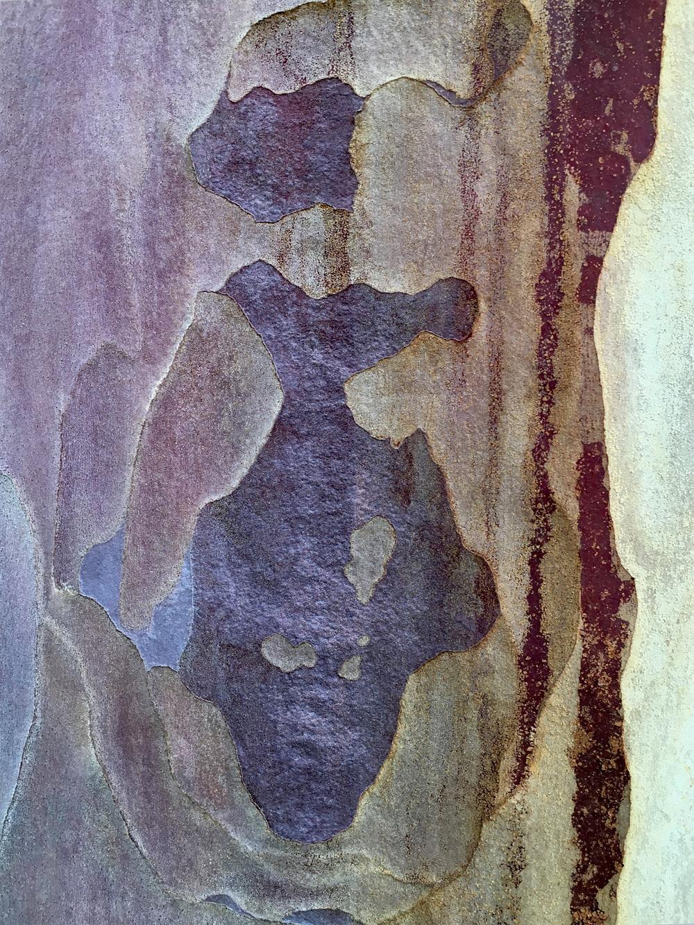 """#8144 eucalyptus bark 26"""" x 33"""" and 16"""" x 20"""""""