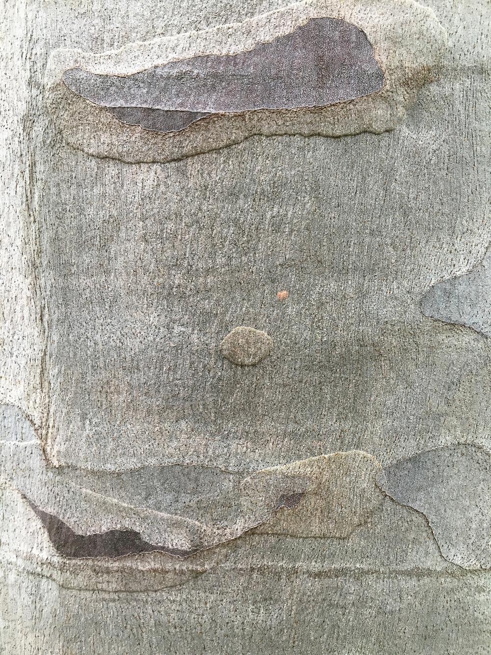 """#8042 eucalyptus bark 26"""" x 33"""" and 16"""" x 20"""""""