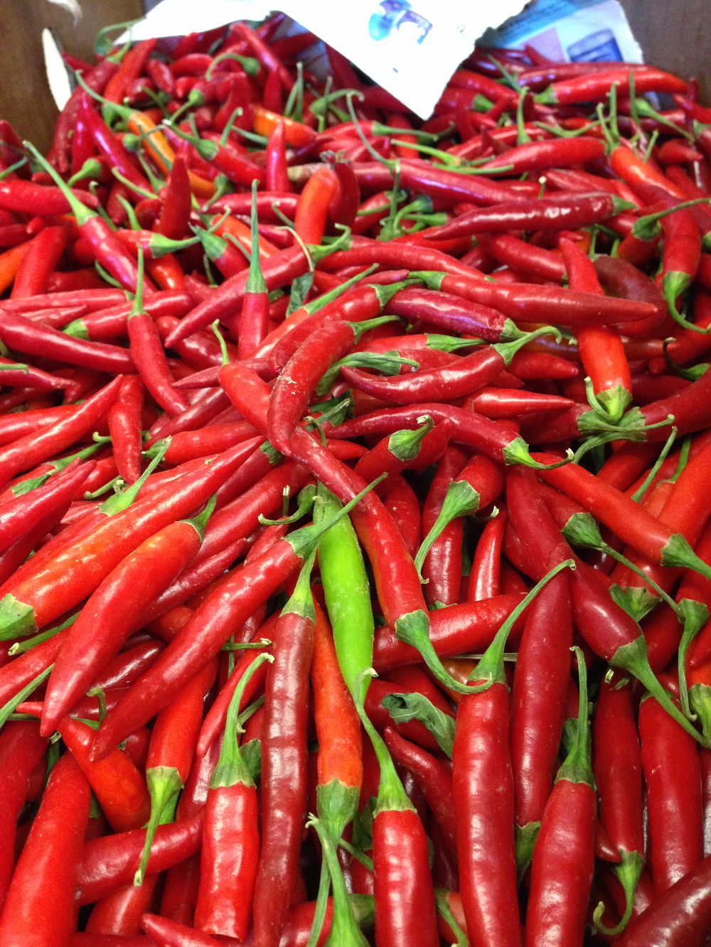 Some variety of Asian hot chili.