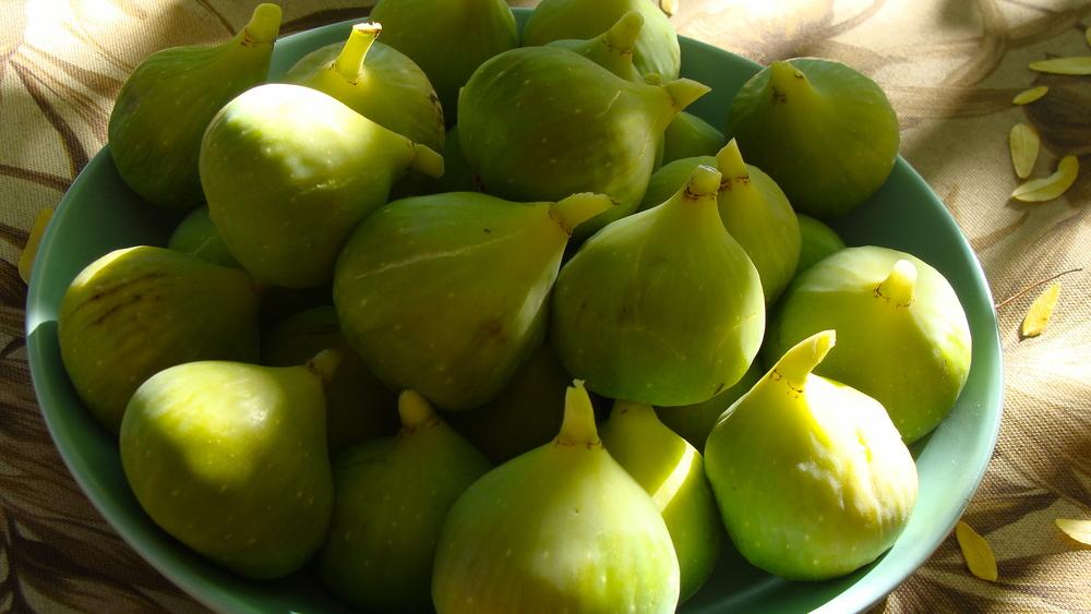 Conadria Figs
