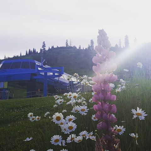 Just as beautiful in the summer. #visitmccall  #18summers  #skiidaho