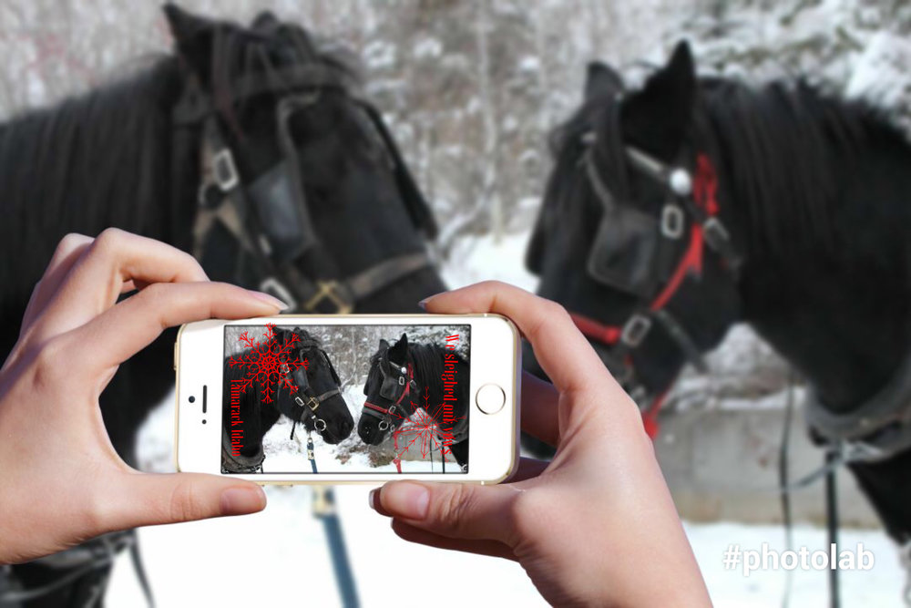 winter wedding horses idaho