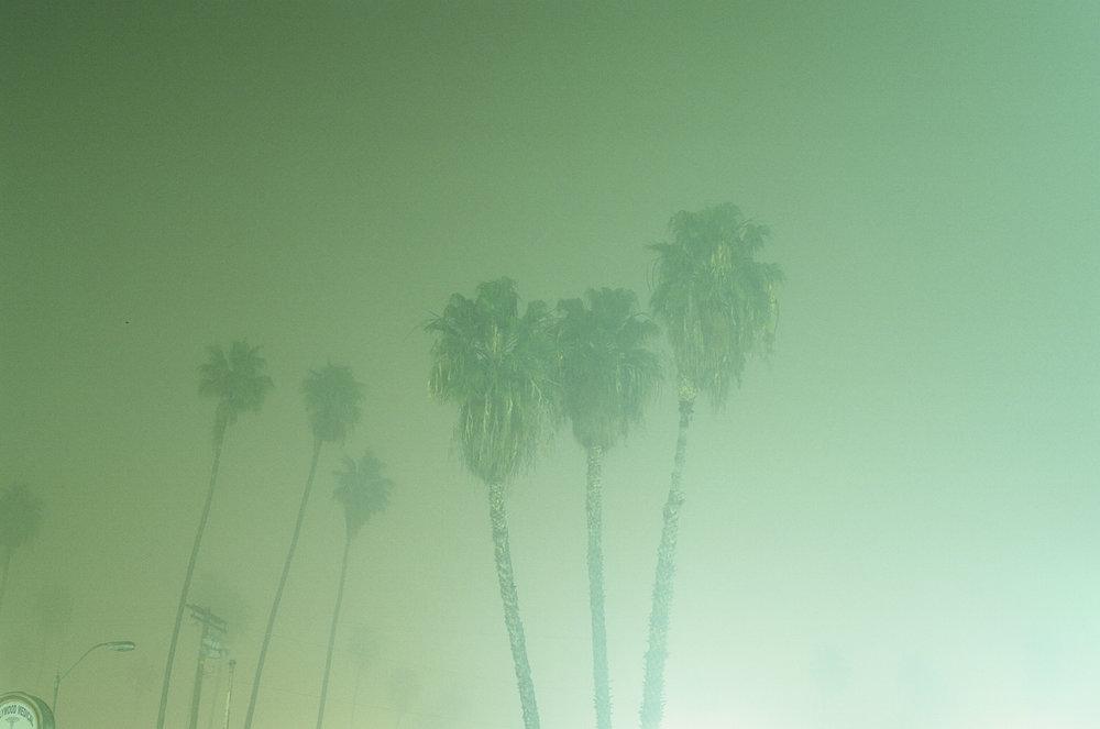 PalmTree_Fog.jpg