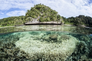 Coral bleaching in Indonesia