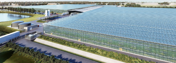 Artist's impression of the Nectar Farms Glasshouse near Stawell. Image: Nectar Farms