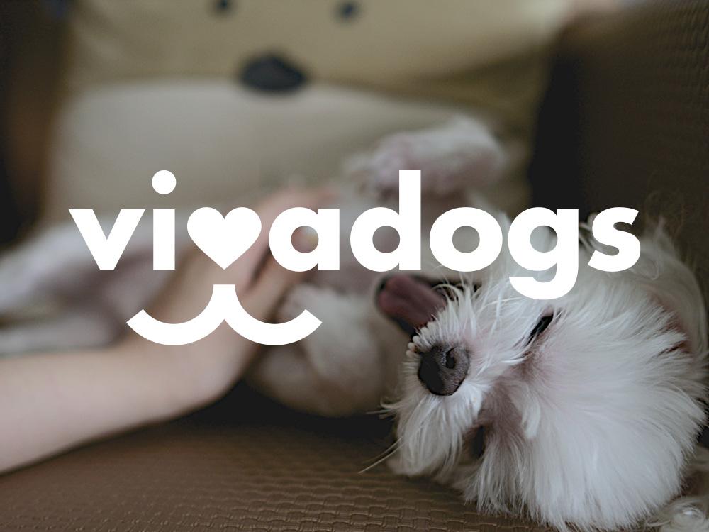Reel-Home_Vivadogs.jpg