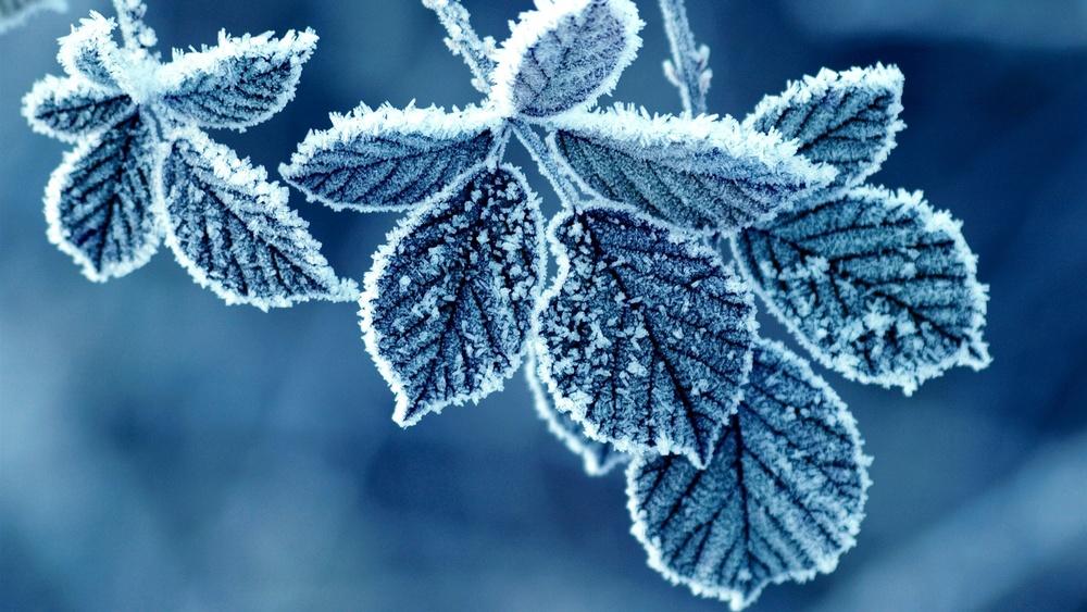 Frost-Leaves-1920x1080.jpg
