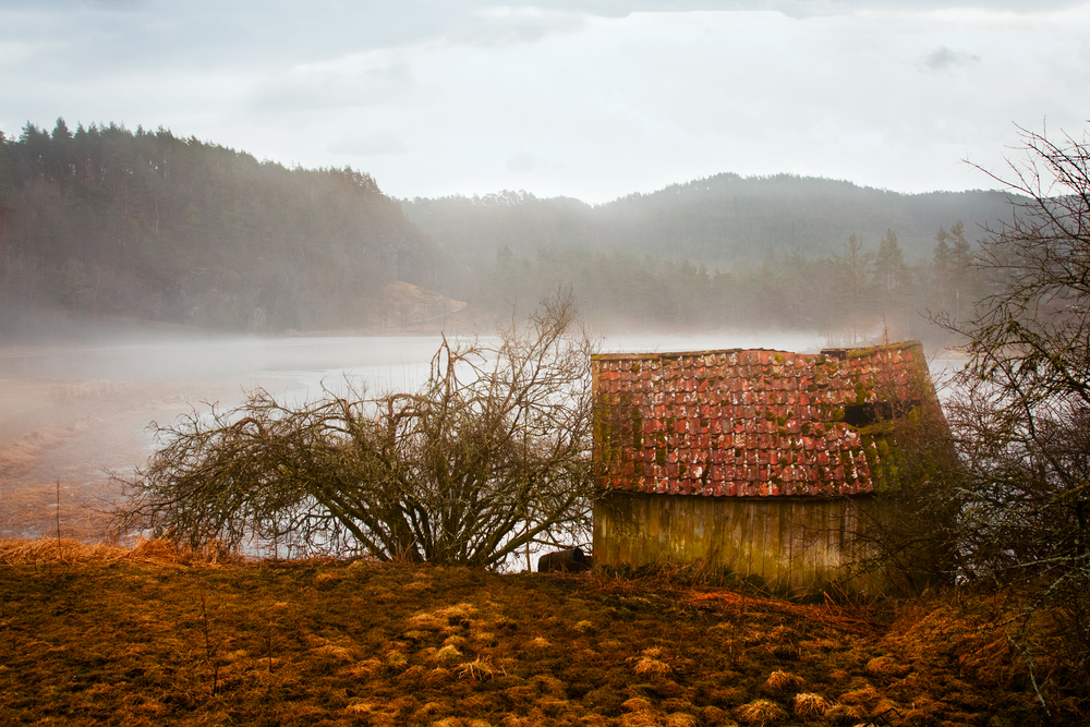 November, Foto Olav Eikeland.jpg