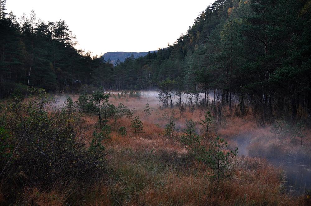 Oktober, Erslandsmarka , Foto Helge Sunde.jpg