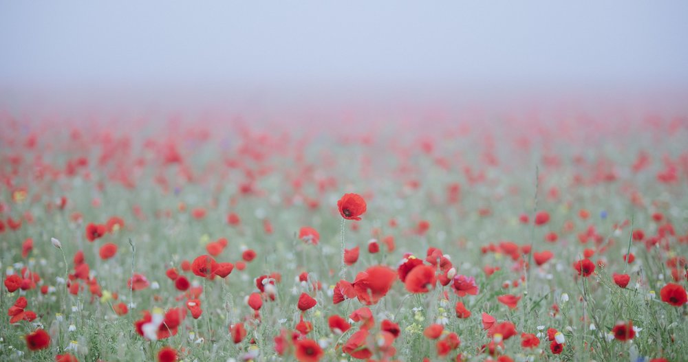 remembrancedaypoppies.jpg