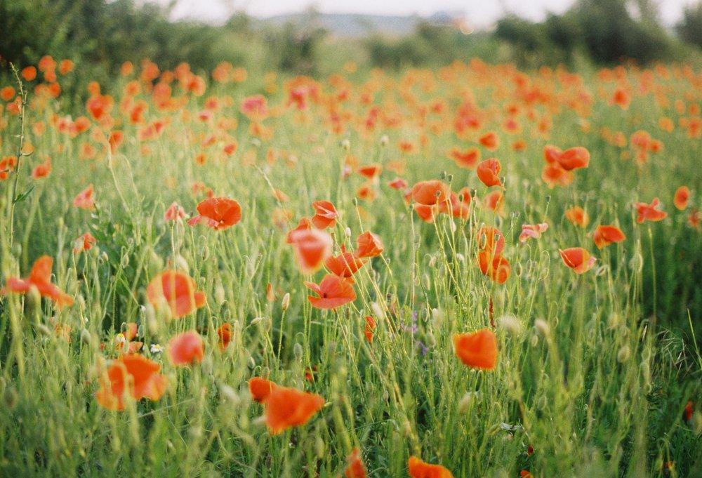 bloom-blossom-cereals-68528.jpg