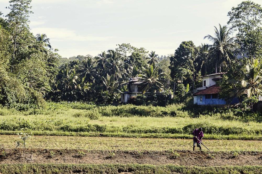 srilanka_0062.jpg