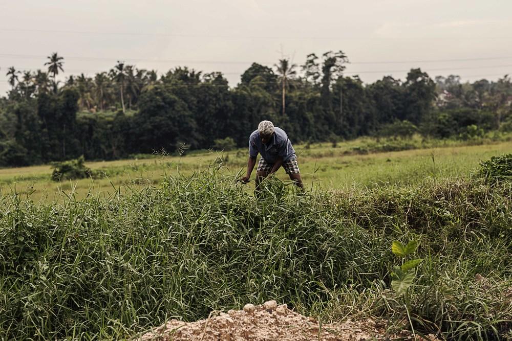 srilanka_0132.jpg