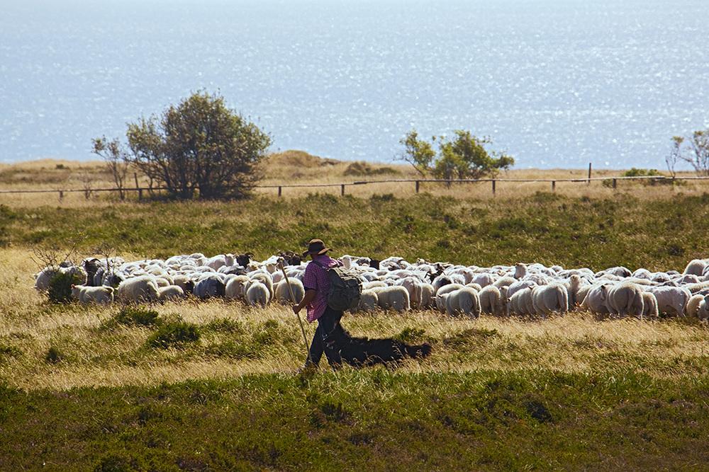 Braderuper Heide, Sylt 2009