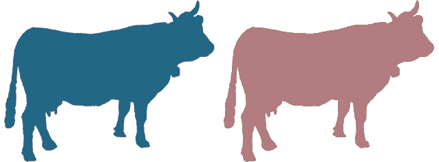 Two of the cows that will feature during the talk.