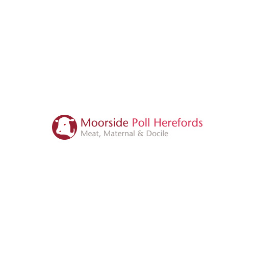 Moorside-Poll-Herefords.jpg