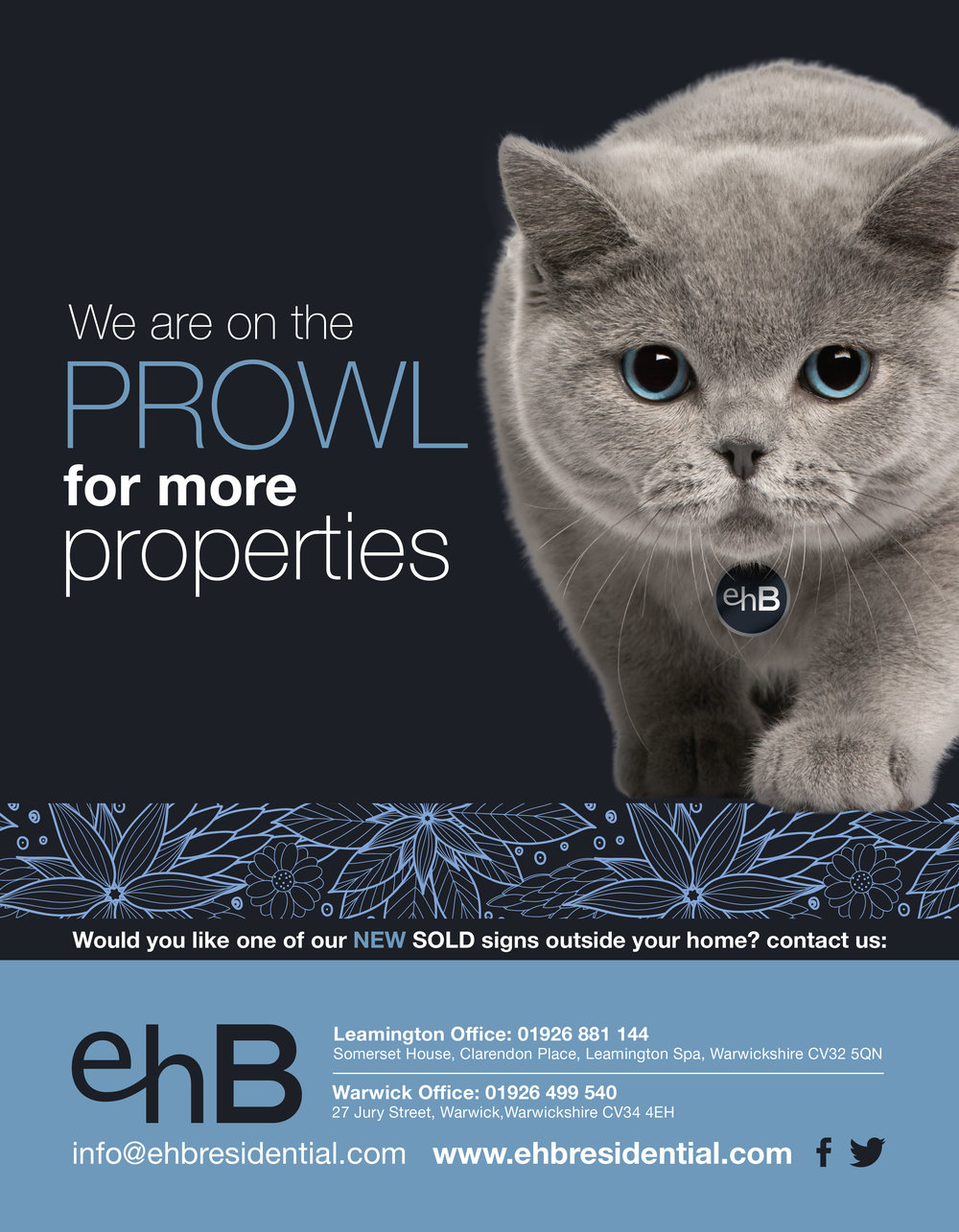 ehb-cat.jpg