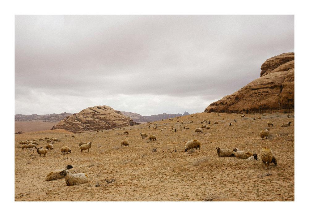 29 1902 JOR Wadi Rum 0557.JPG