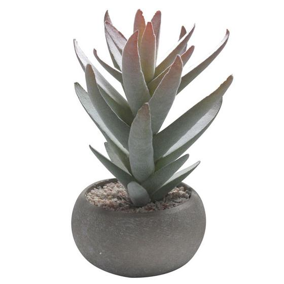 Yakima Succulent from Abigail Ahern