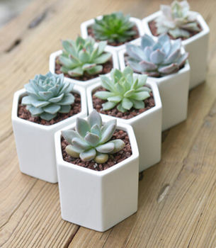 Hexagon Mini Planter from Notonthehighstreet.com