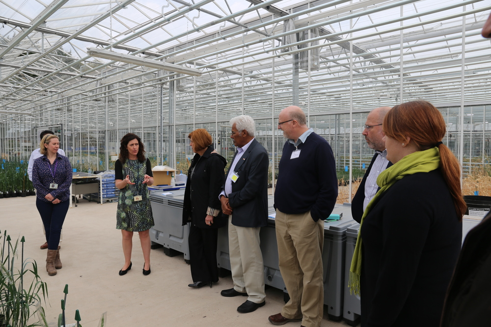 Touring the Glasshouse
