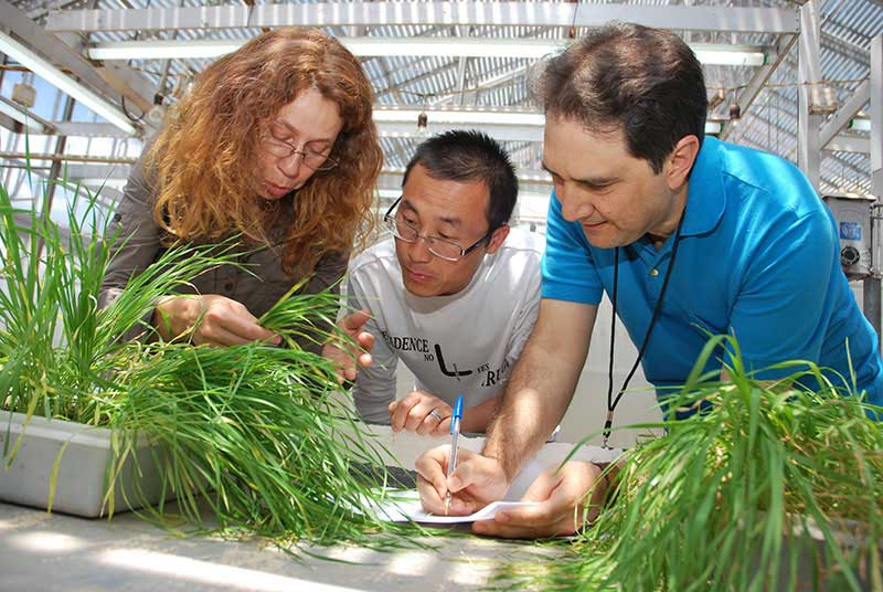 "Support to CIMMYT's wheat improvement courses - We amplify the impact of CIMMYT's Wheat Improvement Courses by bringing critical funding, scientific expertise, mentoring, and other resources. We strengthen these existing training programs by mobilizing funds and volunteer crop scientists to offer their time and expertise to train new ""hunger fighters.""The BTF provides lecturers for these courses and support to the development of training curricula."