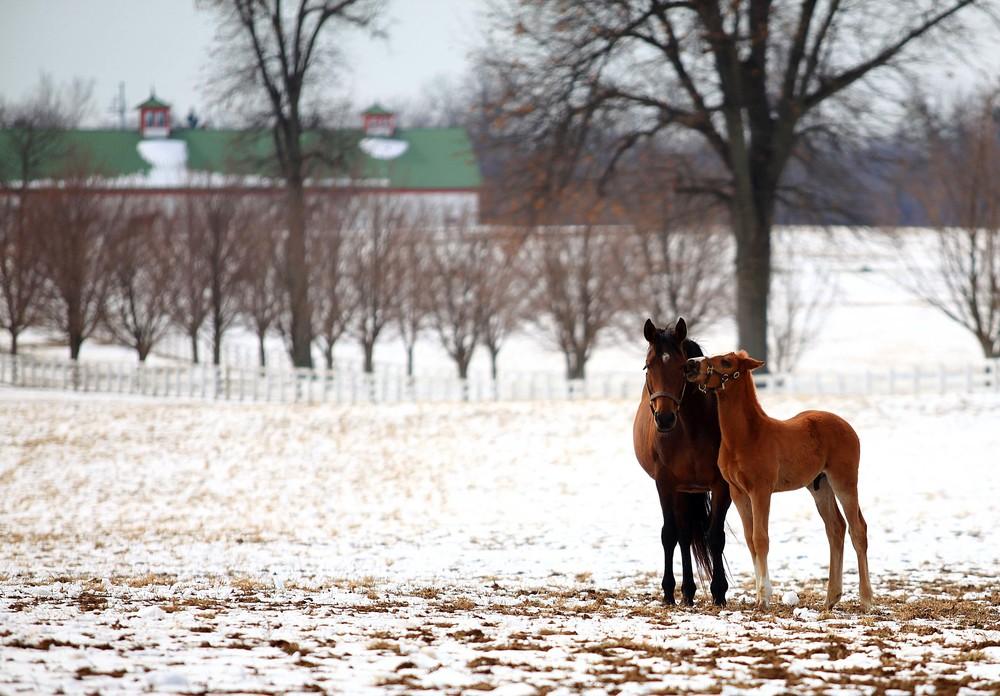 IMG_3221 - Calumet Mare & New Foal.jpg