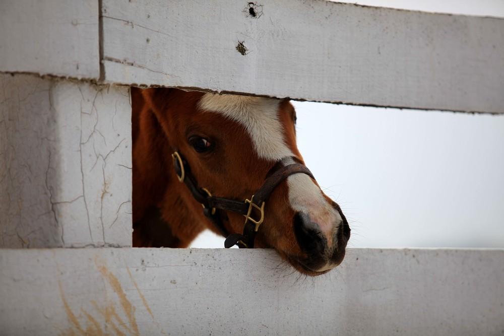 IMG_3246 - Calumet New Foal.jpg