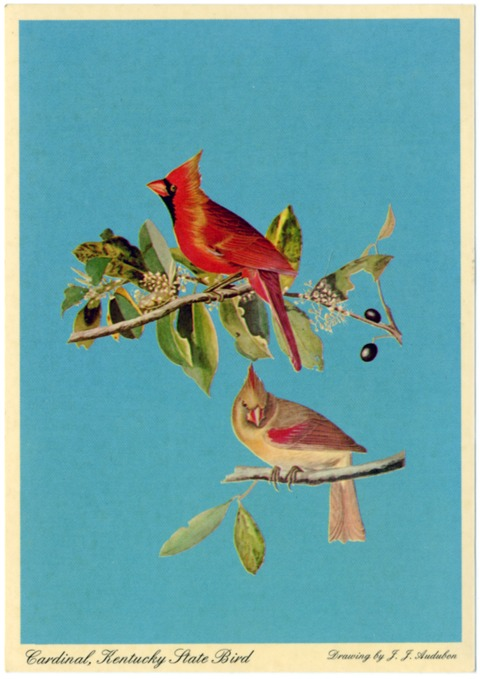 Cardinal, Kentucky State Bird