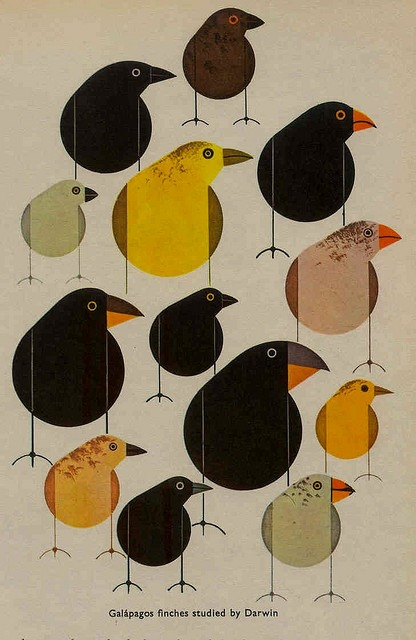 From a 1960's biology book by Charley Harper (via Crafty Dogma)