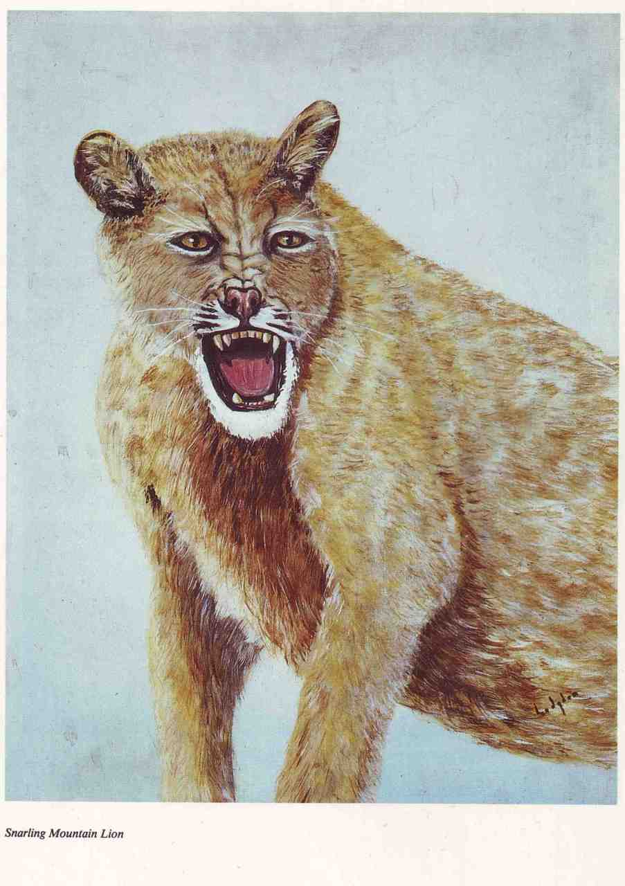 'Snarling Mountain Lion'  - Thrift store art   http://amzn.to/9APZ7b